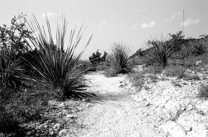 Black and white photo of trail in Bandera Texas