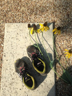 Trail shoes next to flowers on gravel.