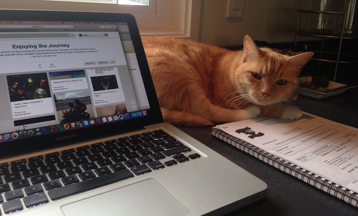 Cat nestled by laptop.