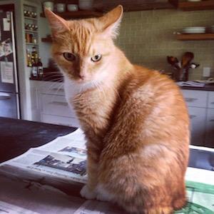 Cat sits on newspaper.