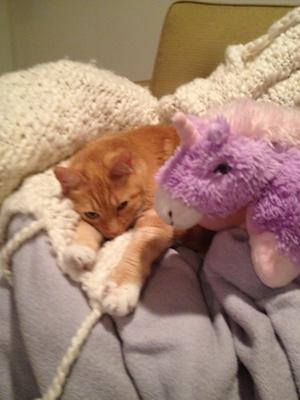 Cat sleeps next to purple stuffed unicorn.