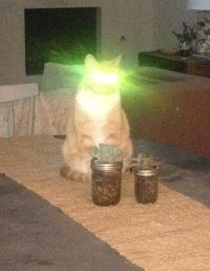 Cat on table has laser eyes from flash.
