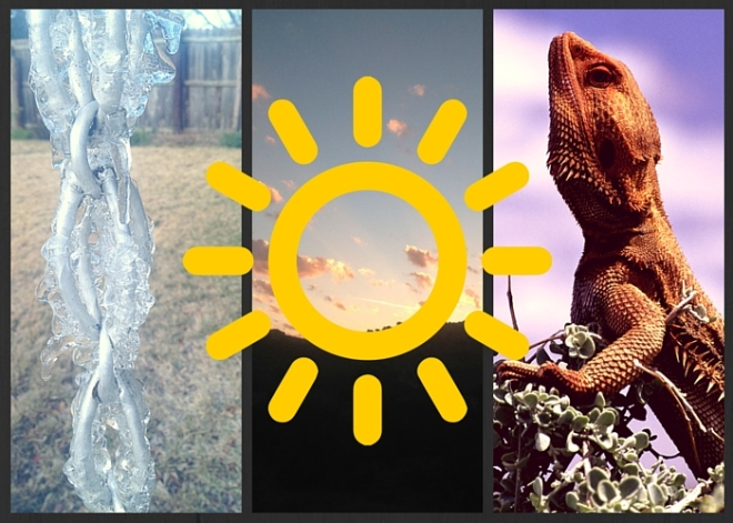 Three part image of ice, sun, and lizard.