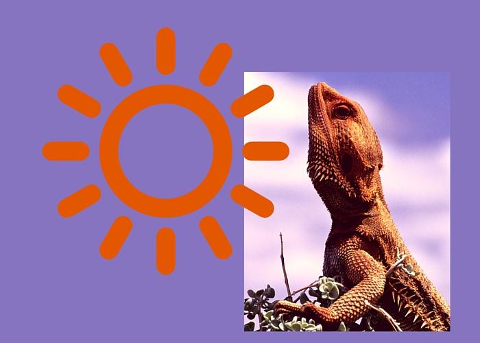 Lizard with Sun
