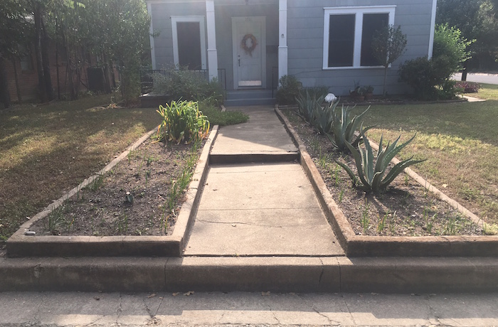 Flower beds with agave and bulbs in front of older home in Austin's Cherrywood neighborhood.