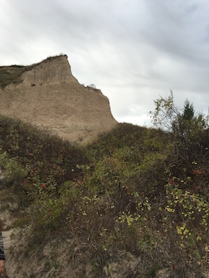 Wildflowers and cliffs on the hike from Hudson-Meng to Toadstool Geologic Park.