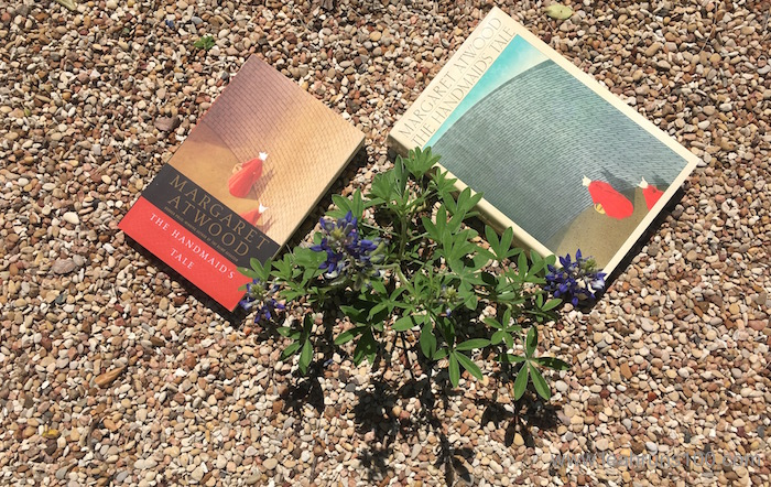 Hardback and paperback copies of Margaret Atwood's The Handmaid's Tale on gravel with a bluebonnet