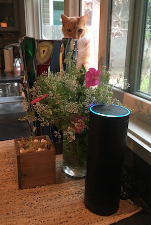 Alexa lit up with cat watching