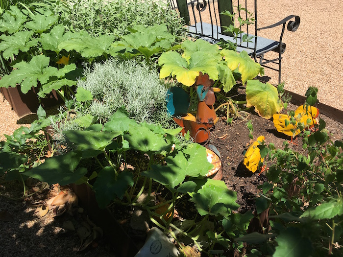 Gardens with squash vines and metal chickens.